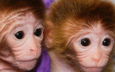 L'inquietudine della clonazione